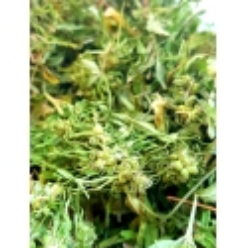 CannaMama chá orgânico da flor do cânhamo 1 kg / 2lb 3.27oz