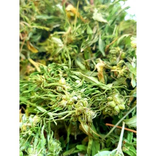 CannaMama Organic Hemp Flower Buds Tea 200g /7.05oz