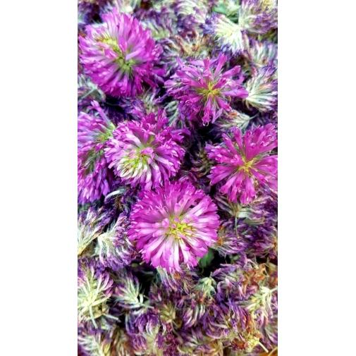Tisane séchée bio à base de trèfle rouge (Trifolium Pratense) 50 g