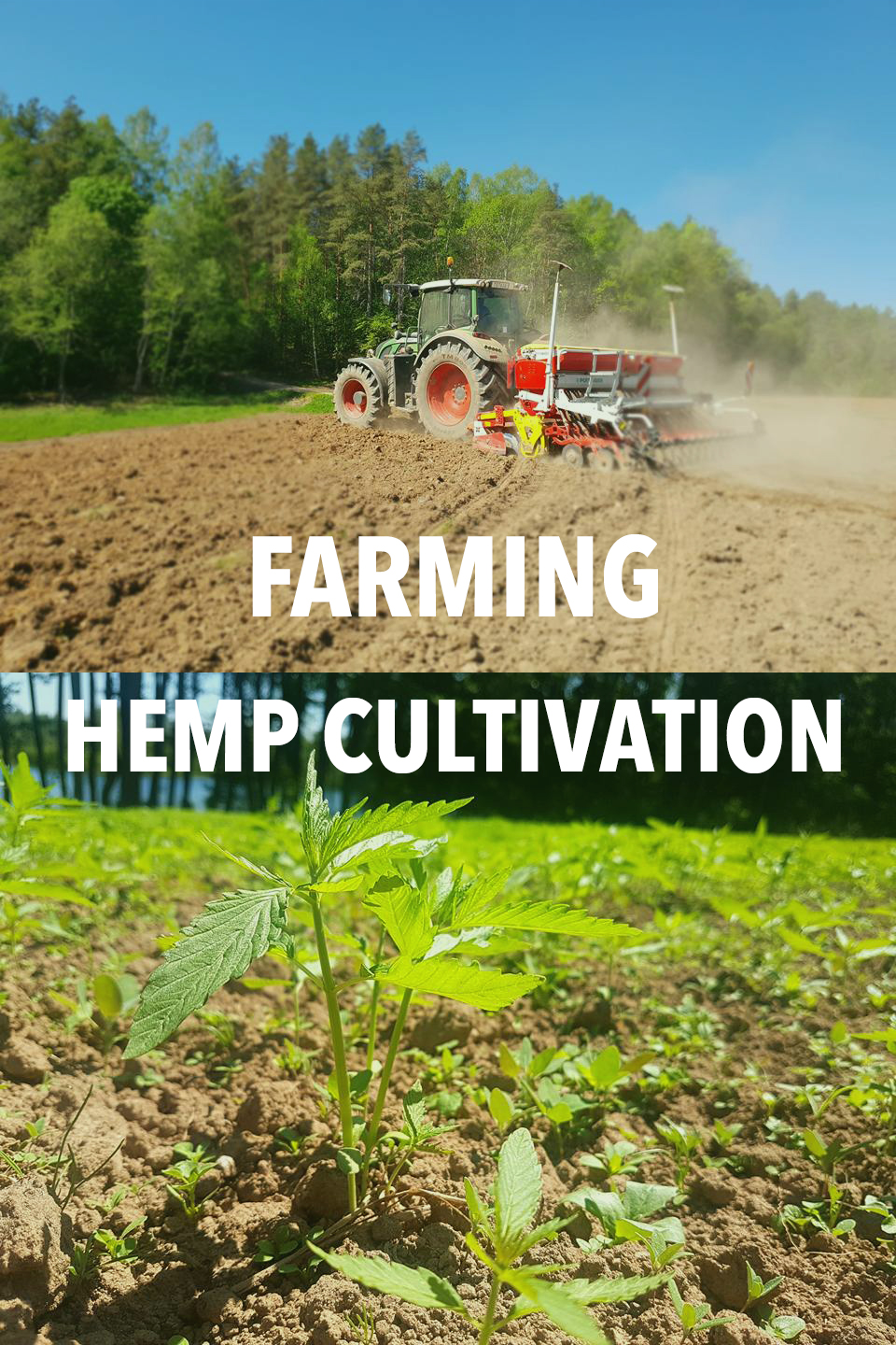 farming hemp cultivation